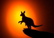 Kangaroo silhouette on sunset Stock Images