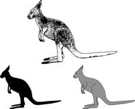 Kangaroo sketch and silhouette Stock Image