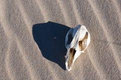Kangaroo Skull Stock Photos