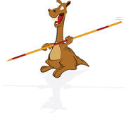 Kangaroo the sportsman Stock Image