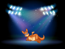 A kangaroo at the stage with spotlights Stock Photo