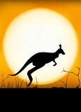 Kangaroo sunset Stock Image