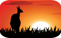 Kangaroo at sunset Royalty Free Stock Image