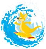 Kangaroo surfer Royalty Free Stock Photo