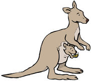 Kangaroo texting. Baby kangaroo texting in mothers pouch Royalty Free Stock Photos