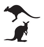 Kangaroo. Vector drawing Royalty Free Stock Images