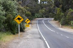 Kangaroos Ahead Royalty Free Stock Image