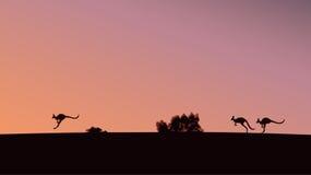 Kangaroos. On the sunset background Royalty Free Stock Images