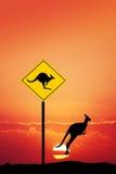 Kangaroos at sunset Royalty Free Stock Photography