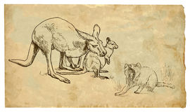 Kangaroos and Tasmanian devil Royalty Free Stock Photos
