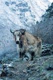 Kangchenjunga стоковое изображение rf