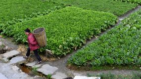 Kangding, Κίνα: Την 1η Οκτωβρίου 2013: Μια εργασία αγροτών στους τομείς Στοκ φωτογραφίες με δικαίωμα ελεύθερης χρήσης