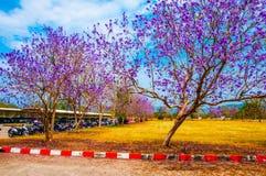 Kangeyoshi de Sembong Sakura Images libres de droits