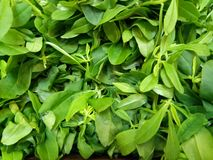 Kangkong. Green leaves sold in market Stock Images