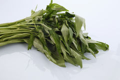Kangkong Royalty Free Stock Images