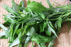 Kangkung or Water spinach Stock Photo