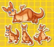 kangoeroe Stock Foto's