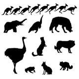 Kangoeroe en gemengde geïsoleerded vectorwilde dieren Stock Afbeeldingen