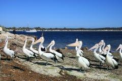 Kangoeroeeiland, Australië Stock Foto's