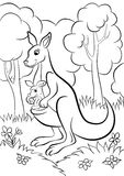 Kangourou avec le bébé Image libre de droits