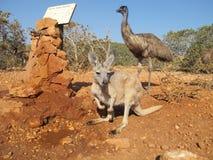 Kangourou et émeus, Australie Images libres de droits