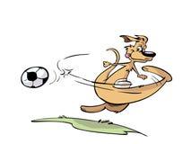 Kangourou jouant au football Photographie stock