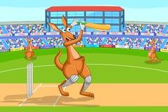 Kangourou jouant le cricket Photographie stock