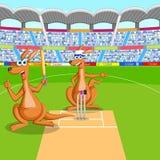 Kangourou jouant le cricket Photos stock