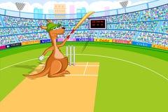 Kangourou jouant le cricket Images stock