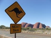 Kangourou prochain Photos libres de droits