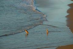 Kangourous dans l'océan Photographie stock libre de droits