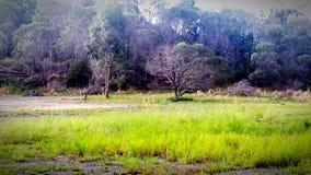 Kangourous dans un domaine photographie stock libre de droits