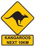 Kangourous en avant Photo libre de droits
