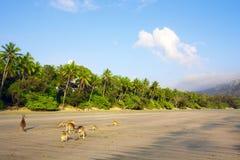 Kangourous sur la plage Images libres de droits
