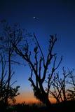 kangra月出上升生动日落的谷 免版税库存图片