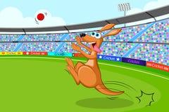 Kangur bawić się krykieta Obrazy Royalty Free