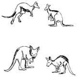 kangur nakreślenie ręką tła rysunku ołówka drzewny biel Obrazy Stock