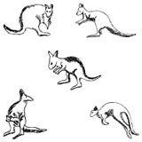 kangur nakreślenie ręką tła rysunku ołówka drzewny biel Fotografia Royalty Free