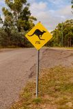 Kangur następnie 4km - folujący wizerunek zdjęcia stock