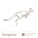 Kangur, rysować zwierzęta, vectore Obrazy Royalty Free