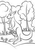Kangur w lesie Obrazy Royalty Free