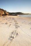 Kangurów druki w piasku Zdjęcia Royalty Free