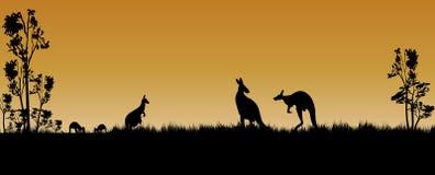 Kangury i drzewa jako sylwetka w zmierzchu fotografia royalty free