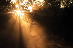 Kanha Nationaal Park Royalty-vrije Stock Foto