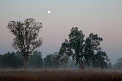 Kanha National Park - India Royalty Free Stock Photos