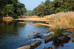 Kanha National Park - India Royalty Free Stock Image