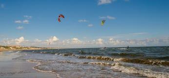 Kani kipiel na Mazagon plaży, Huelva, Andalusia, Hiszpania Fotografia Royalty Free