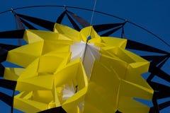 kani kolor żółty Fotografia Royalty Free