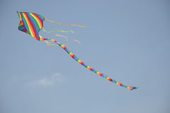 kani latający niebo zdjęcie royalty free