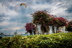 Kani latanie w Bougainvillea ogródzie Przy plażą zdjęcia royalty free